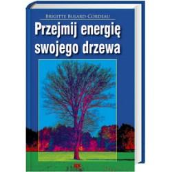 Przejmij energię swojego drzewa