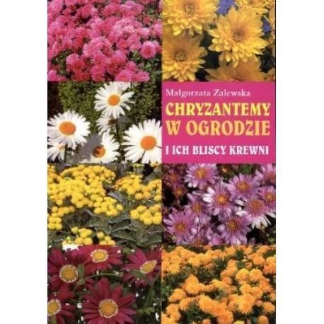 Chryzantemy w ogrodzie i ich bliscy krewni