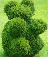 cięcie roślin
